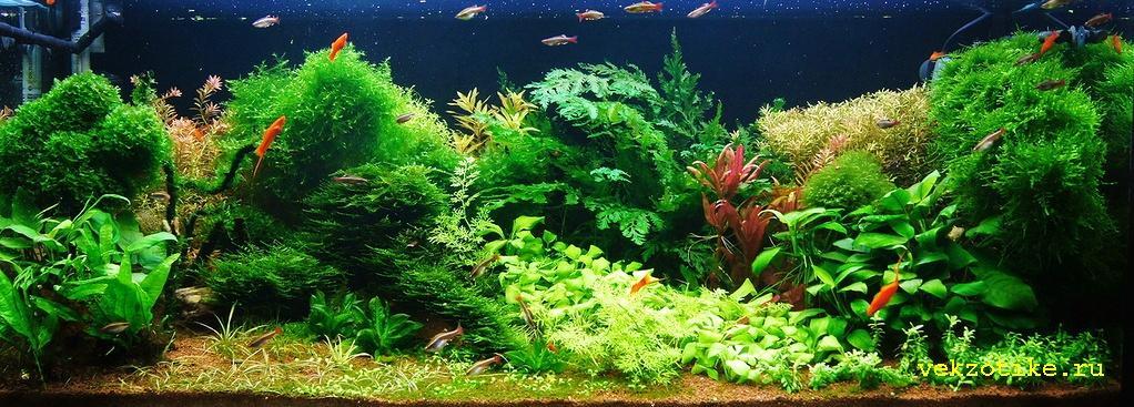 Голландский аквариум 330