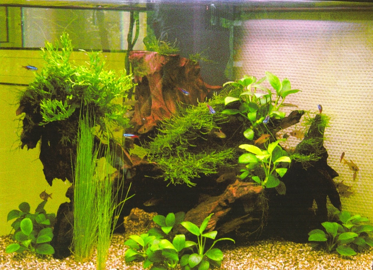 Делаем аквариумные растения своими руками 80