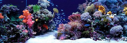 морской аквариум, голландский стиль