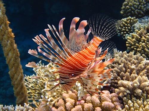 рыба красное море