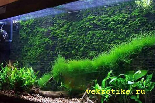 2 июня 2010 г - rutrackerorg  флора и фауна  скачать торрент природный аквариум такаши амано 2010 г